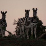 Addo_Elephant_Park_Tour00060