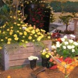 Addo Rose and Garden Show